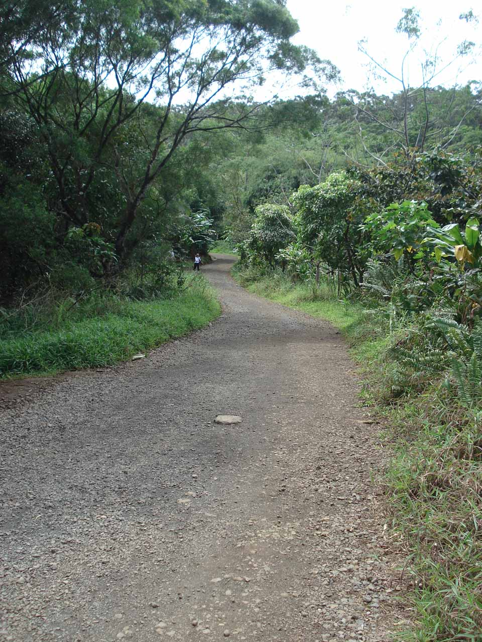 The wide trail to the falls