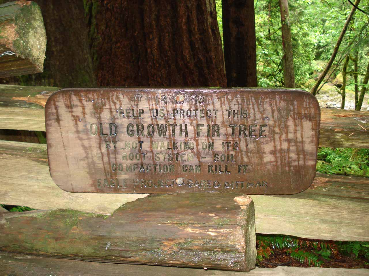 Old Growth Fir Tree signage we saw along the way to Twin Falls in 2006 though I missed this on the second visit