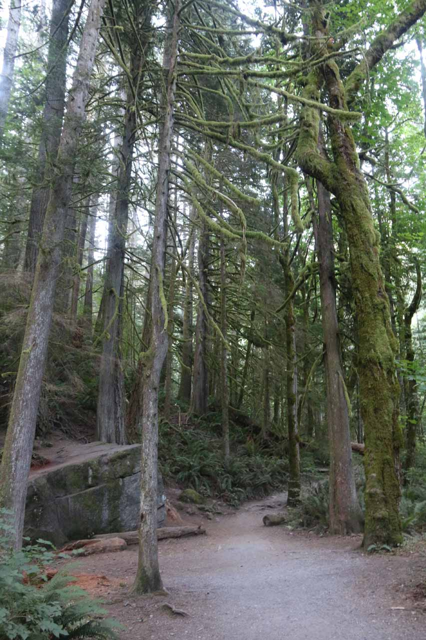 Another look at some of the mossy trees growing alongside the Twin Falls Trail