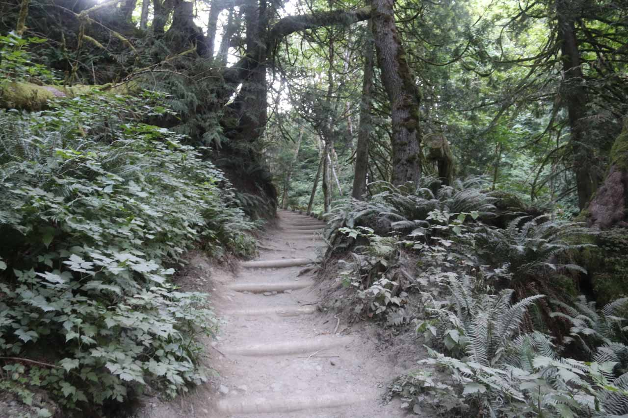 Now, the Twin Falls Trail started climbing again