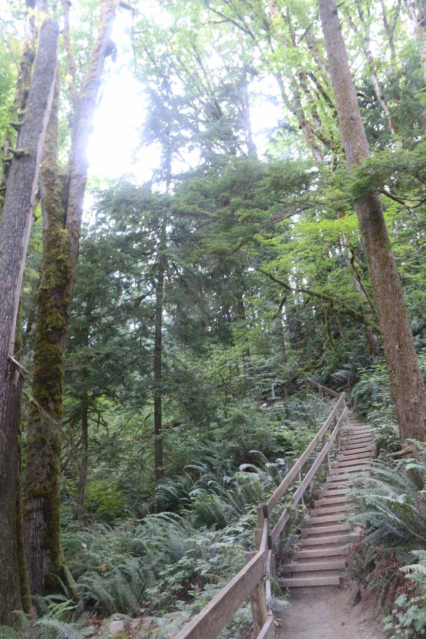Going back up the 104 steps to regain the Twin Falls Trail