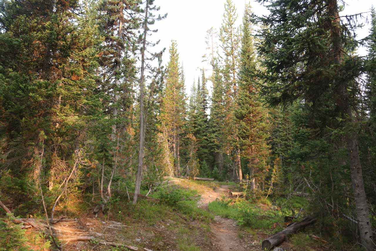 Hiking through the forested terrain of the first mile of the Union Falls Trail