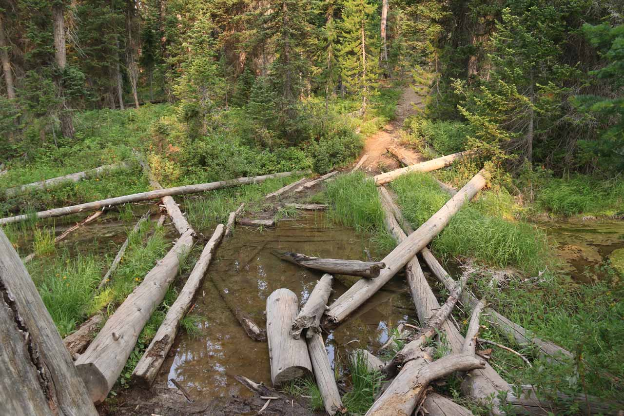 This was the crossing of the seasonal creek, which was standing water during my August 2017 visit. The logs there helped me keep my feet dry