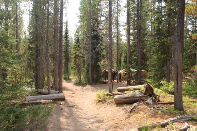 Union_Falls_280_08122017 - Corral with pack horses parked at the junction of the Ousel Pool and Union Falls spur trails