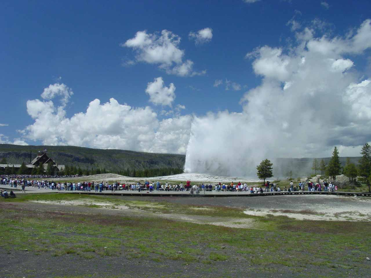 Distant view of the Old Faithful Geyser putting on a show in front of a crowd