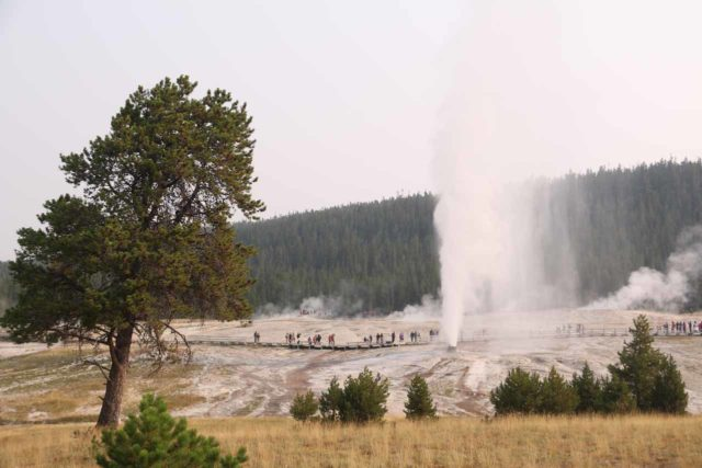 Upper_Geyser_Basin_17_048_08112017 - Of the geysers we saw at the nearby Upper Geyser Basin, it was the Beehive Geyser that really put on a show, and we just so happened to catch it on our second visit in August 2017