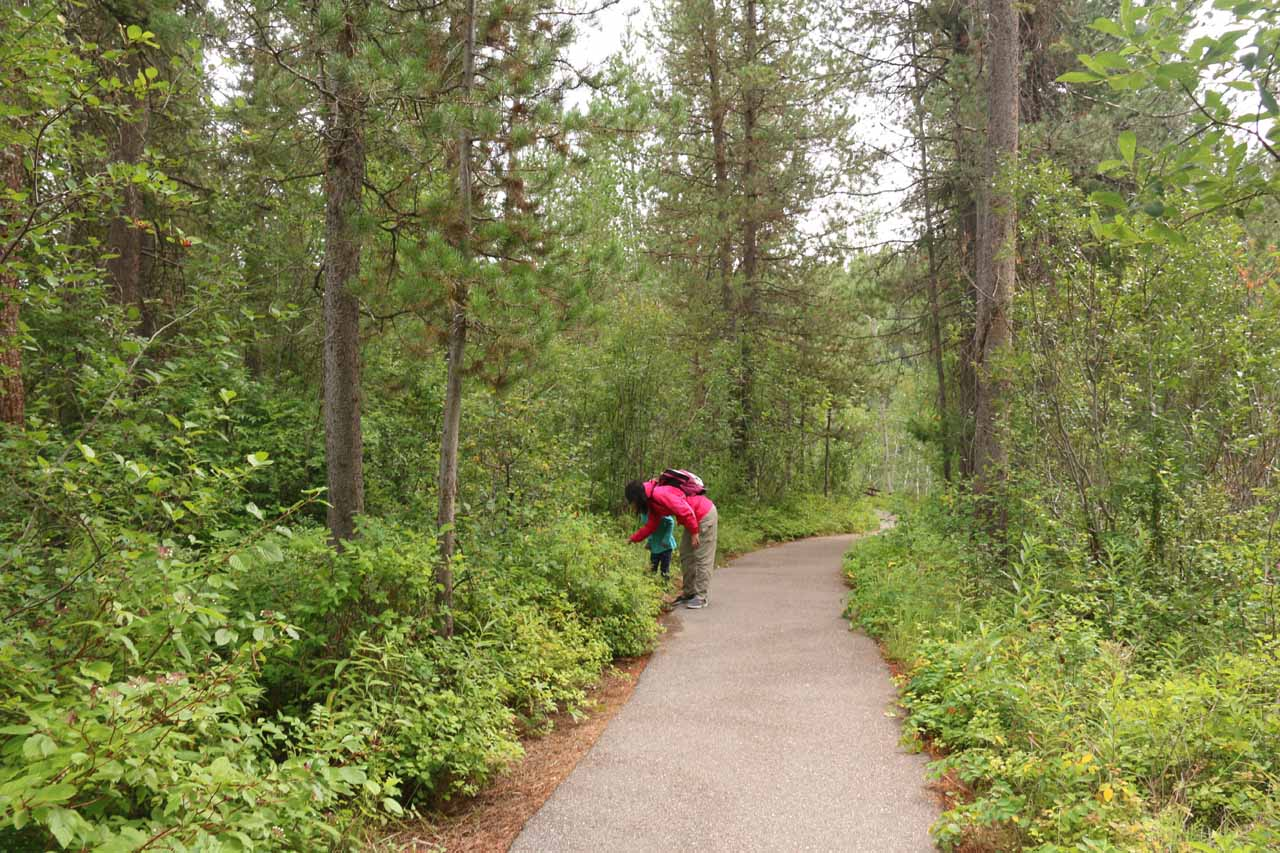 Julie and Tahia looking for huckleberries along the trail