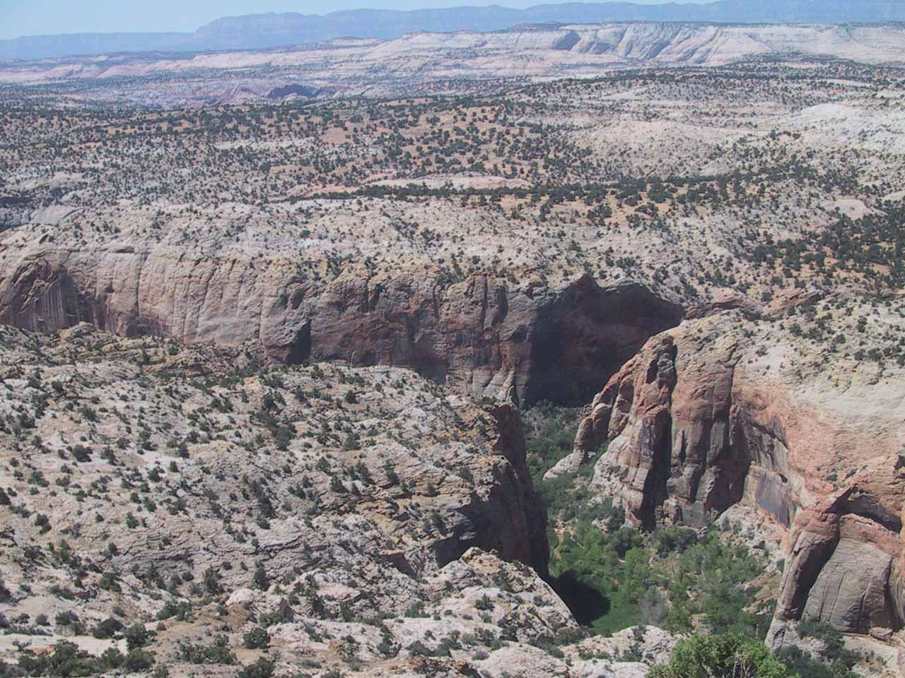 Looking down at Calf Creek Canyon