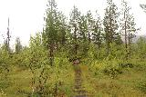 Utladalen_119_07212019 - Passing through a meadow-like section that was prone to muddiness though some steps had been set up so I wouldn't sink in the muck