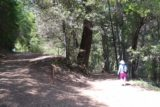 Uvas_Canyon_009_05192016 - Mom walking by the climbing trail leading into Alec Canyon