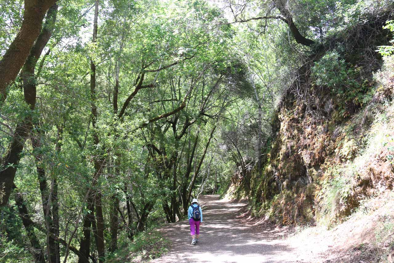 When we did this hike, we kept right at the bottom of the Waterfalls Loop and went up this mostly uphill and somewhat featureless hike.  If we had to do it over again, we would have gone left and hiked alongside the relaxing Swanson Creek