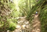 Uvas_Canyon_158_05192016 - The lower side of the Waterfalls Loop Trail always kept close to Swanson Creek, which meant the soothing sounds of running water always kept us relaxed on this part of the hike
