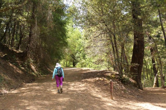 Uvas_Canyon_192_05192016 - This is the trail junction where we had to keep left to climb onto the Alec Canyon Trail (the Waterfalls Loop Trail was on the right