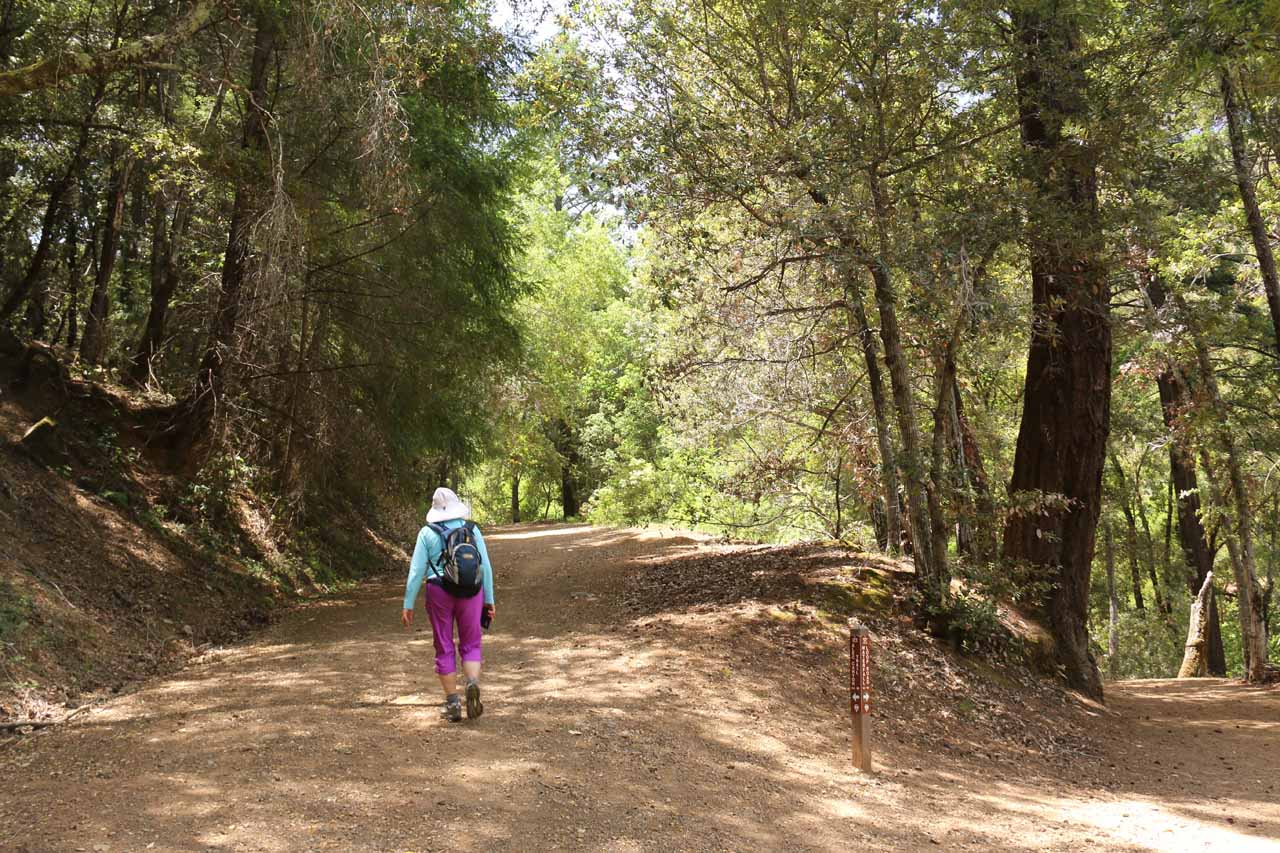 Starting the steep ascent up the Alec Canyon Trail as we were leaving the Uvas Canyon floor