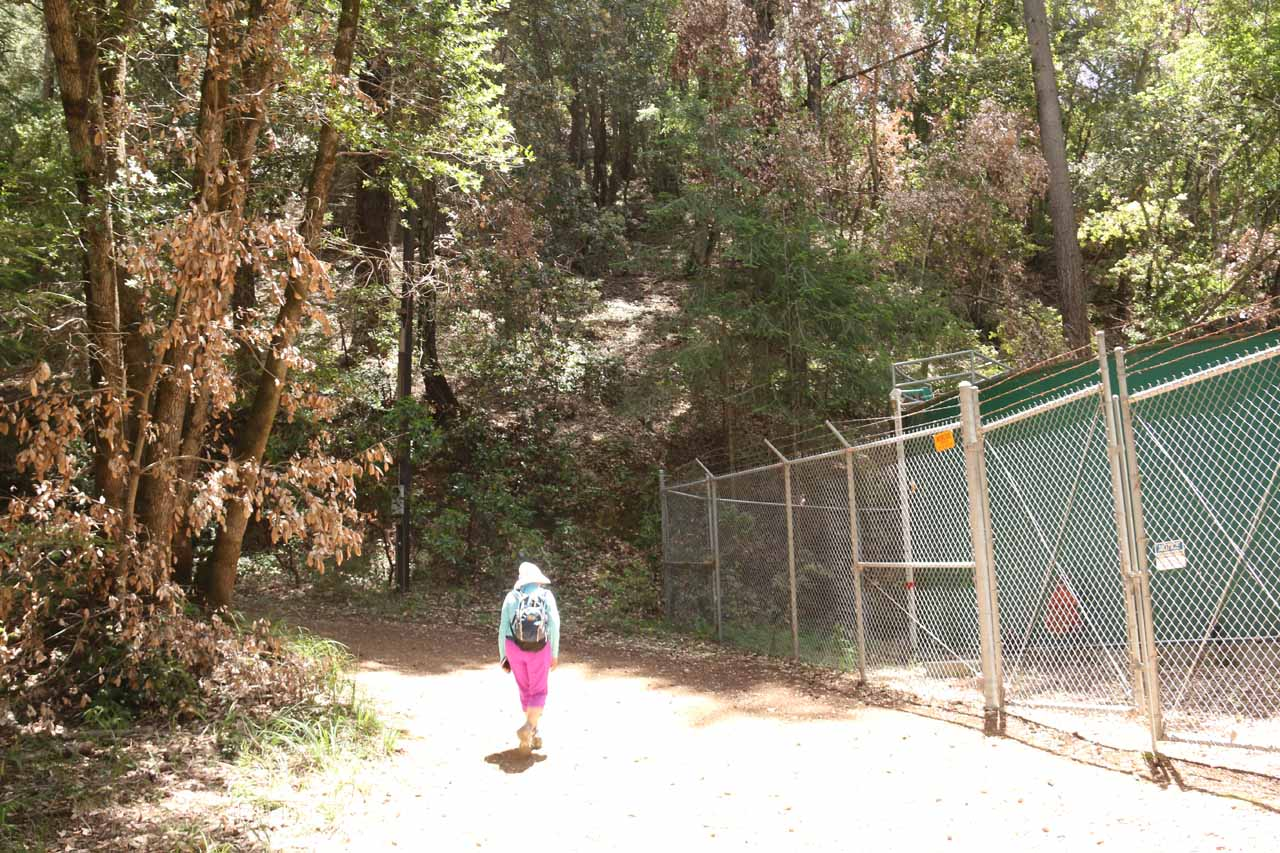 The fencing at this curve in the Alec Canyon Trail appeared to be protecting some kind of small power station probably harnessing the power of Swanson Creek