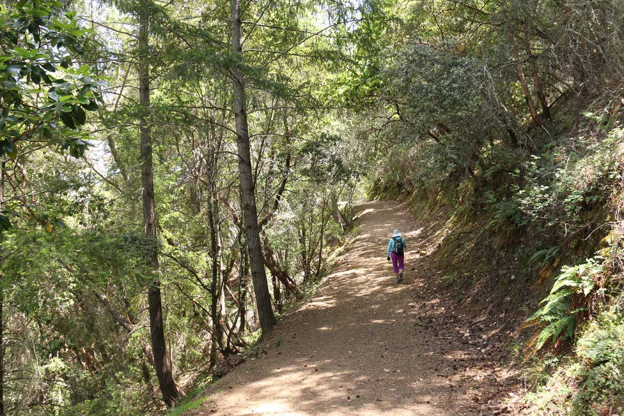 Although the initial climb up towards Alec Canyon was only about a half-mile long, it felt a lot longer than that due to how relentlessly uphill it was