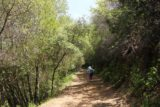 Uvas_Canyon_209_05192016 - The Alec Canyon Trail briefly went back into the shade while leading us towards Manzanita Point