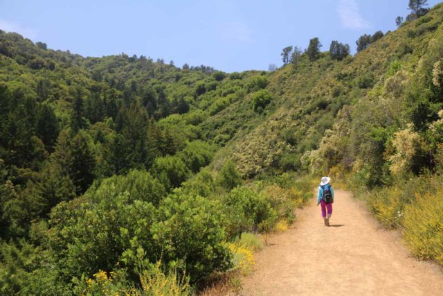 Uvas_Canyon_220_05192016 - Mom descending towards Alec Canyon, which was the next canyon over from Uvas Canyon as we pursued Triple Falls