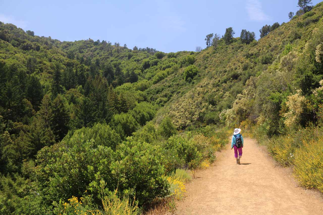 Now the Alec Canyon Trail descended towards the next gully, which happened to be the one that would harbor Triple Falls