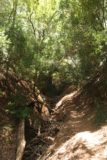 Uvas_Canyon_232_05192016