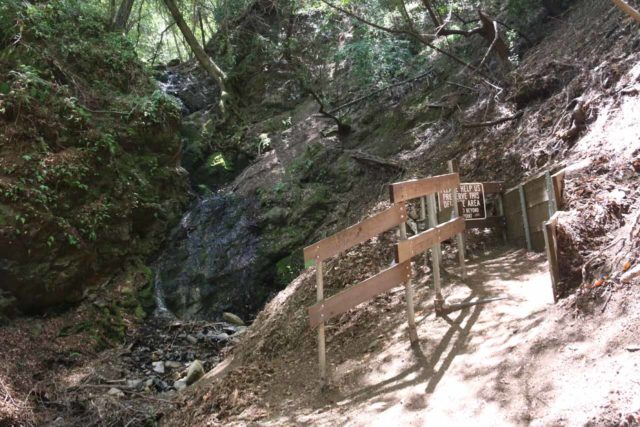 Uvas_Canyon_240_05192016 - Approaching the dead-end at the Triple Falls in Alec Canyon