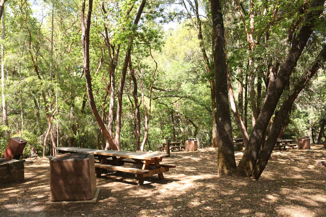 Back at the picnic area by the parking lot of Uvas Canyon County Park