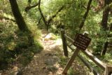 Uvas_Canyon_254_05192016 - This was the trail leading from the car park to the Lower Falls, which apparently was also known as Uvas Falls