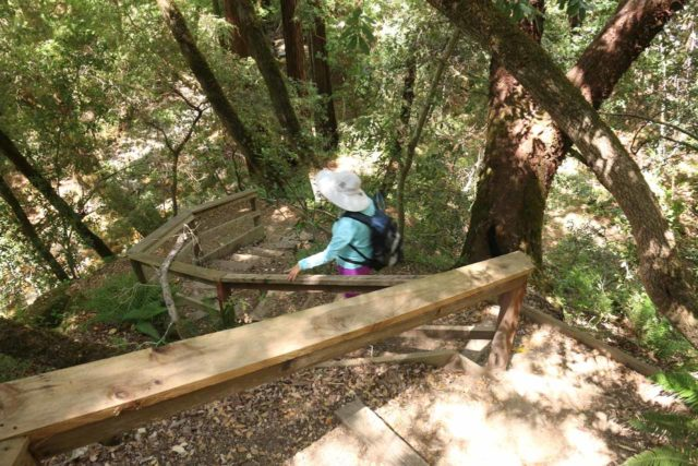 Uvas_Canyon_259_05192016 - Mom descending steps deeper into the canyon in pursuit of the Lower Falls