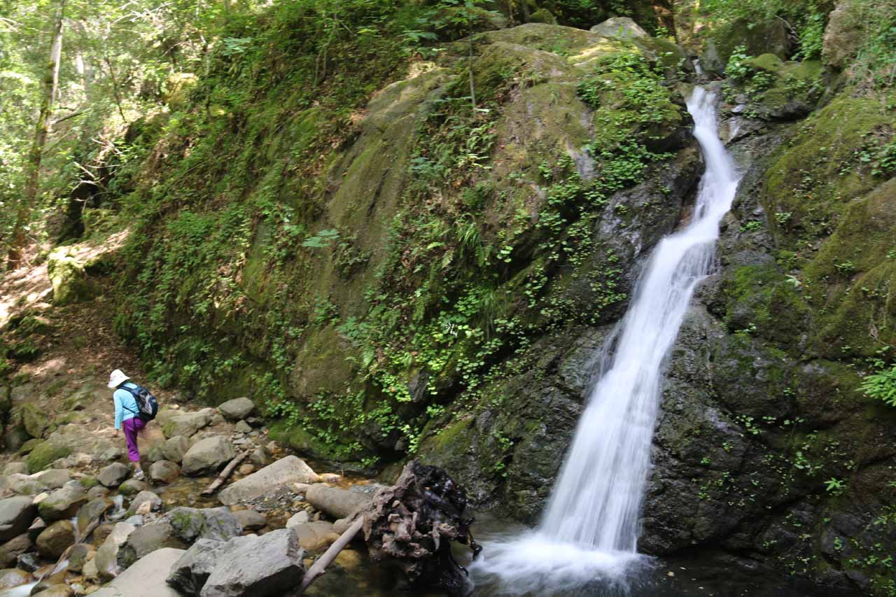 Lower Falls (also known as Uvas Falls) - one of several waterfalls in or near the Uvas Canyon County Park's Waterfall Loop Trail