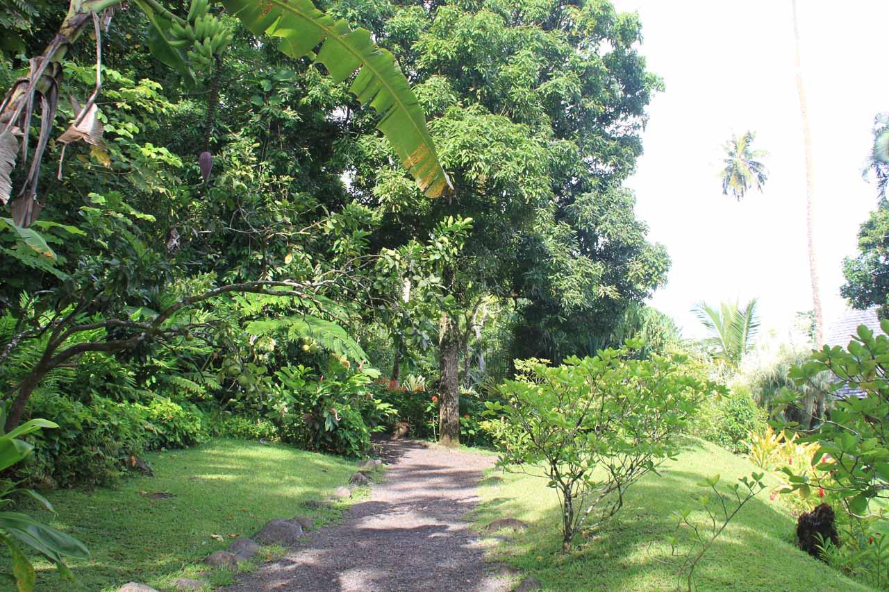 The walking path through the garden