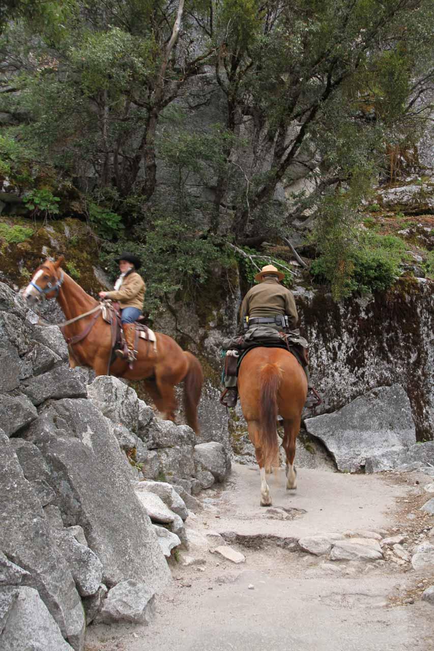 Stock on the John Muir Trail
