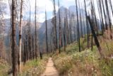Virginia_and_St_Mary_Falls_036_08062017 - The trail to St Mary Falls meandering through lots of burnt bare trees resulting from the Reynolds Creek Fire in 2015