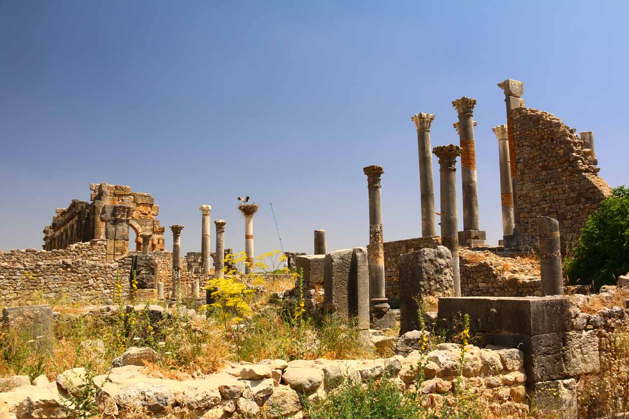 Looking towards a series of pillars amongst other ruins and weeds in Volubilis