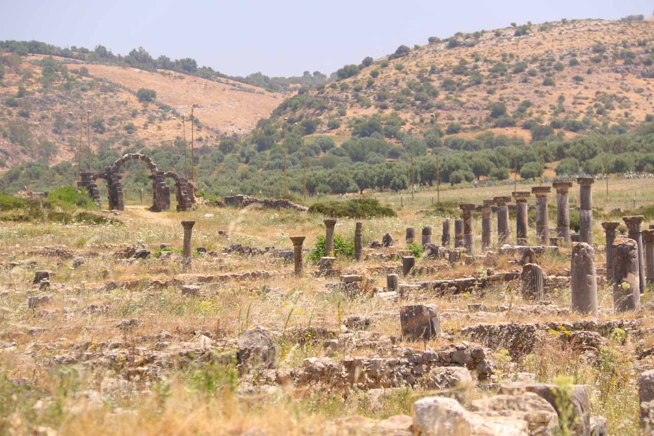 Volubilis had an extensive series of ruins still standing amongst the weeds