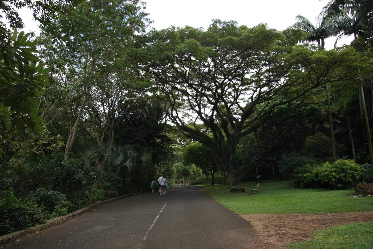 Further along the paved walk through the botanical garden