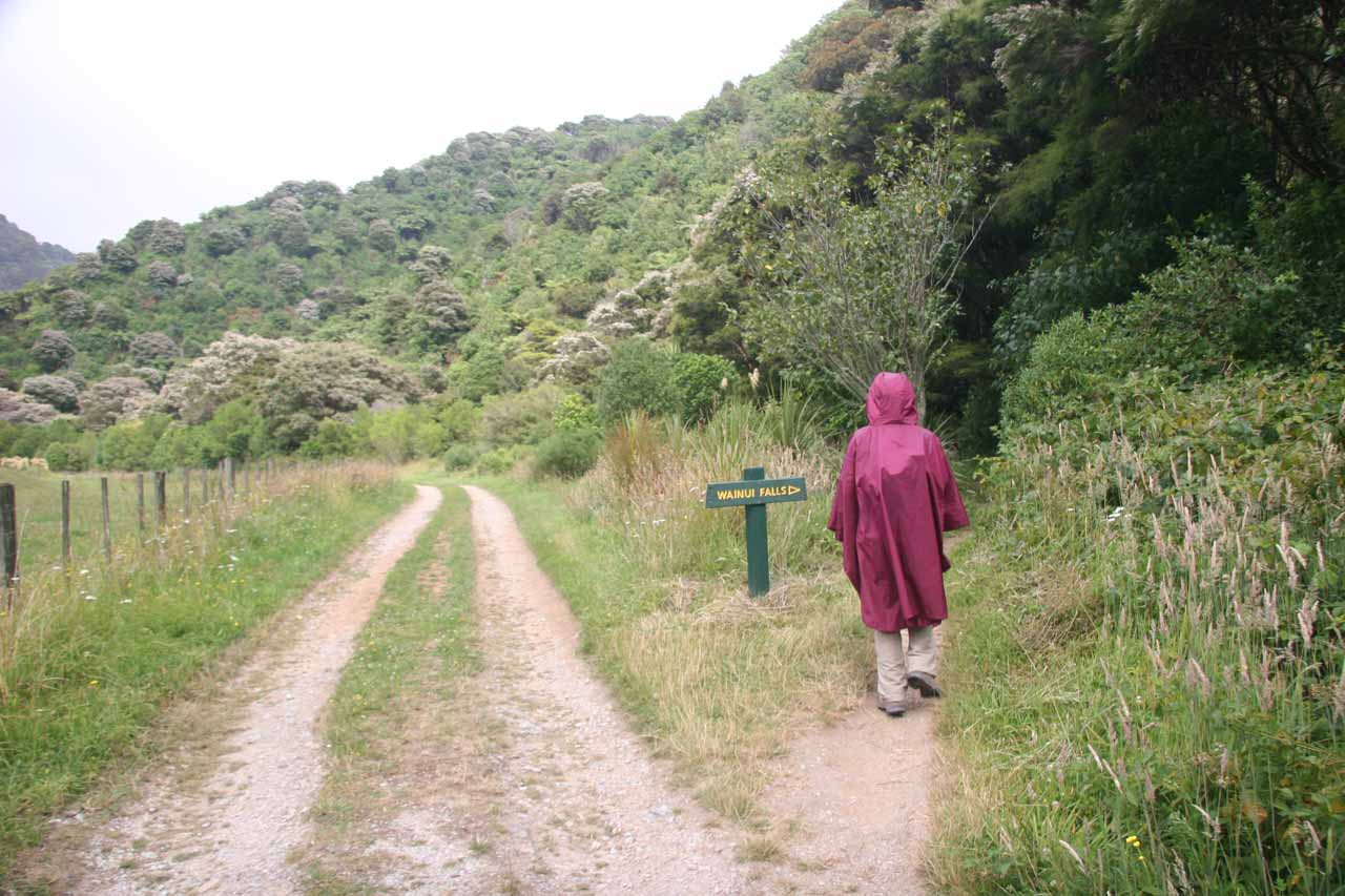 Julie leaving the road to get onto the Wainui Falls Track