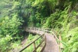 Wainui_Falls_020_01012010 - After the wire-mesh swinging bridge, the track continued over this section of boardwalk
