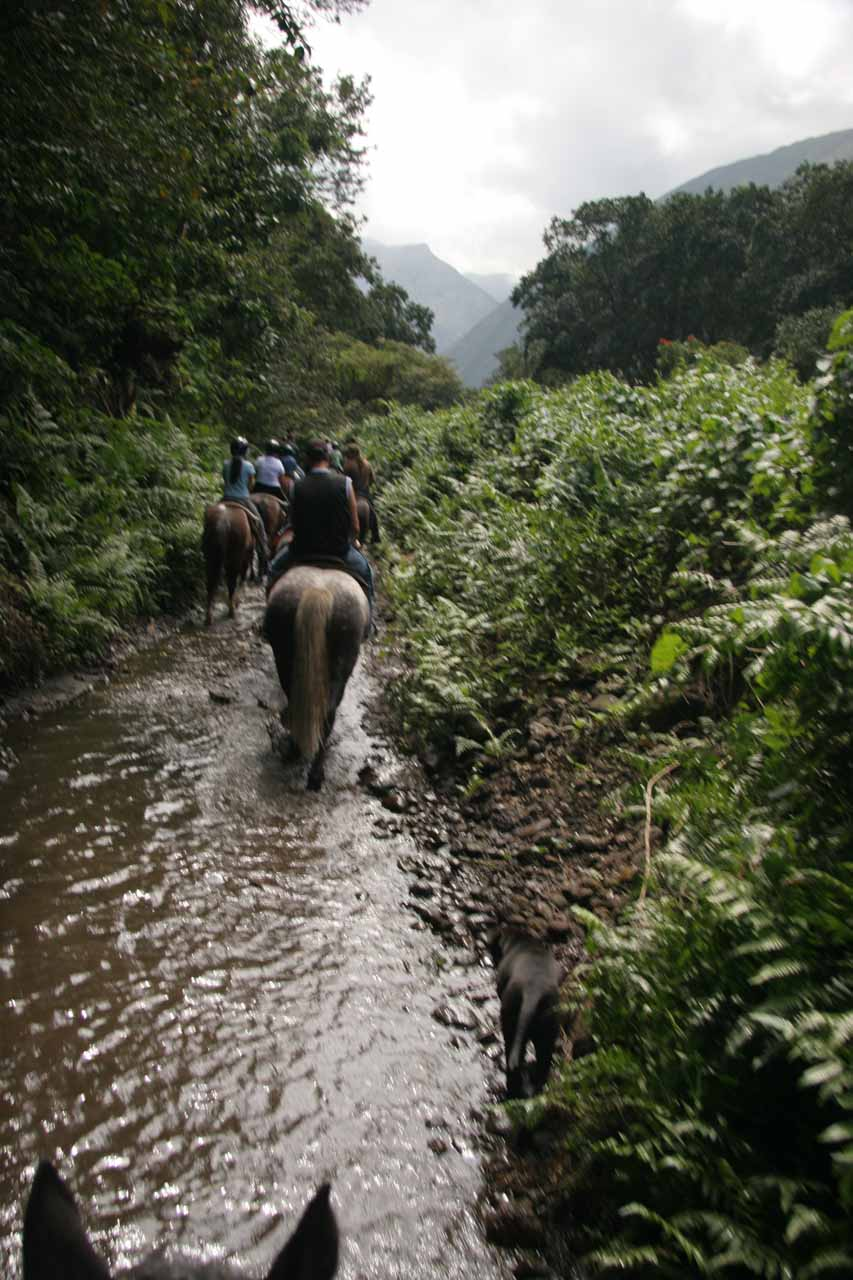 A benefit of riding horses is not having to negotiate water crossings on foot