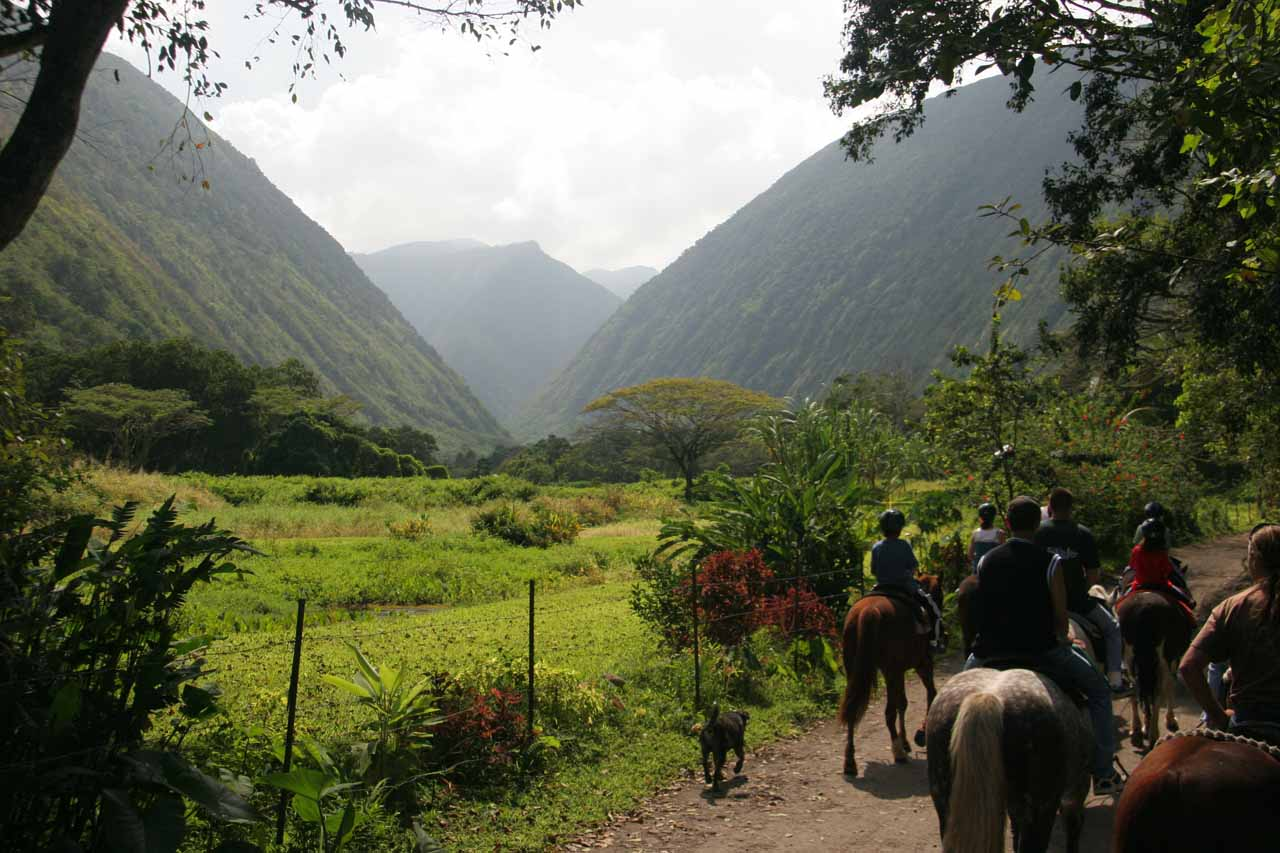 Horseback riding deep into Waipi'o Valley near our turnaround point
