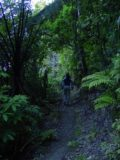 Waipoua_Forest_001_11072004
