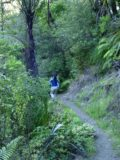 Waipoua_Forest_002_11072004