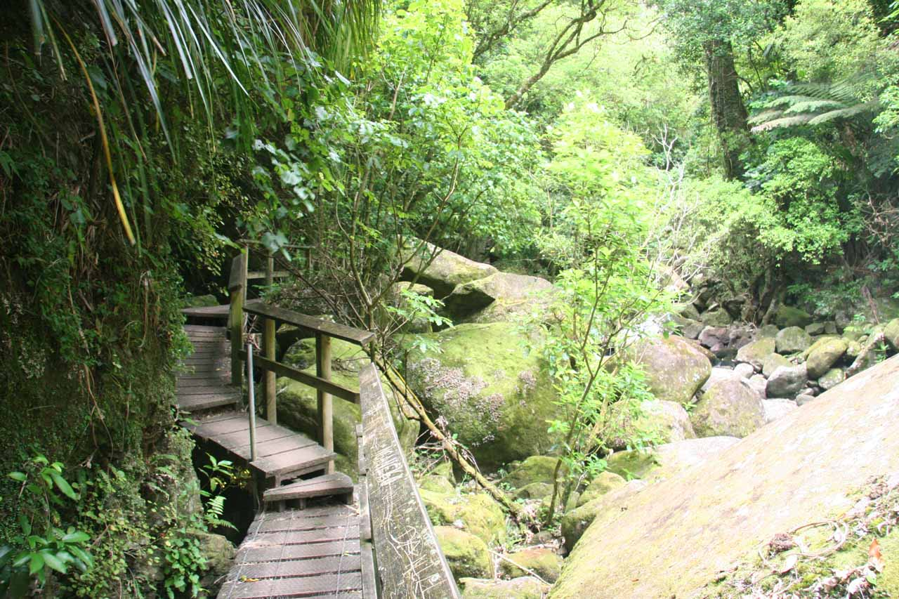 A more recent look at the bush walk alongside the Wairere Stream