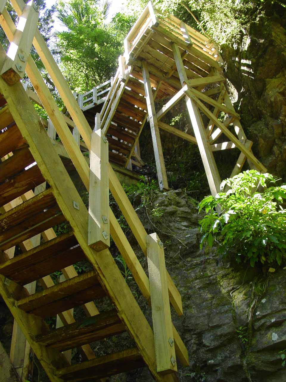 Ascending the wooden steps as we made the steep ascent up to the lookout of Wairere Falls