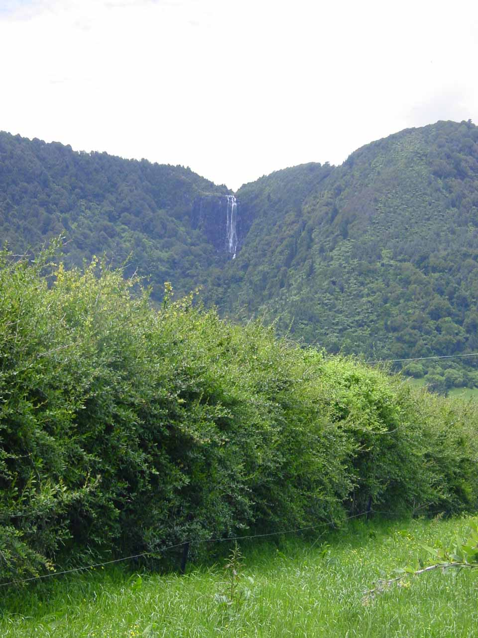 Looking back at Wairere Falls from within the Waikato Plains