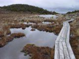 Waitonga_Falls_016_11162004 - The scenic bog on the way to Waitonga Falls