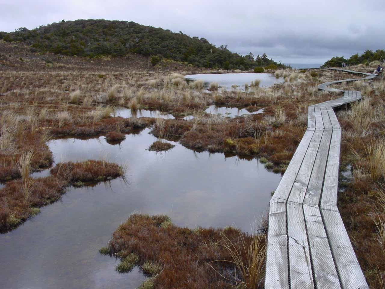 The scenic bog on the way to Waitonga Falls