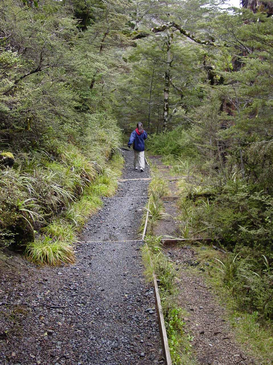 On the Waitonga Falls Track beyond the scenic bog