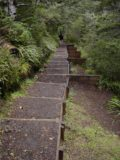 Waitonga_Falls_026_11162004 - The track descending towards the base of Waitonga Falls