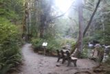 Wallace_Falls_17_037_07292017 - Some rest benches were strategically placed along the Woody Trail for those hikers who would rather take their time on the Wallace Falls hike