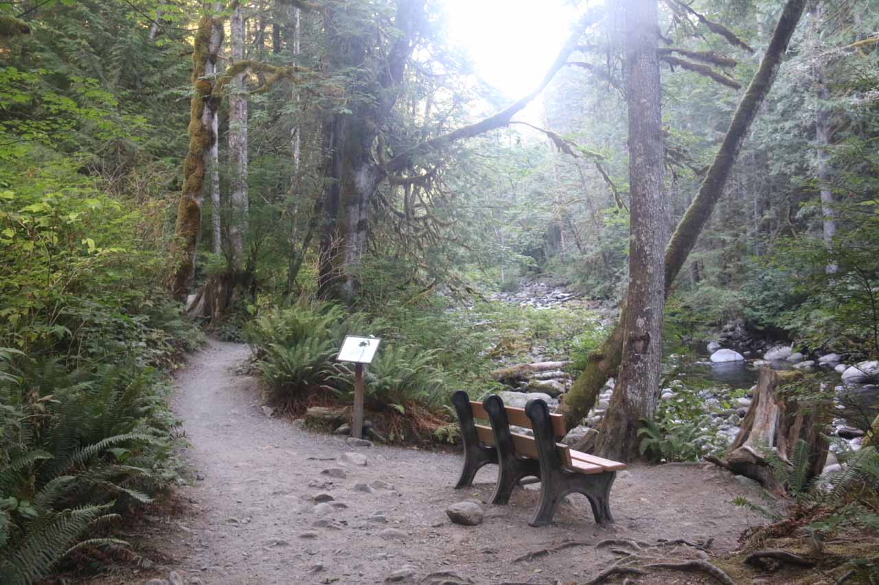 Some rest benches were strategically placed along the Woody Trail for those hikers who would rather take their time